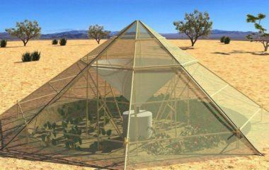 לגדל צמחים במדבר – חממה חדשנית